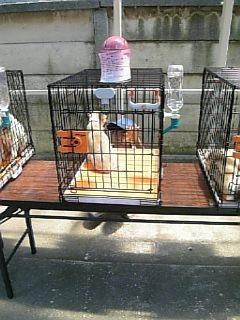 動物管理センター